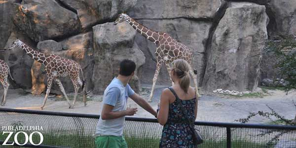 Dating in Philadelphia Zoo