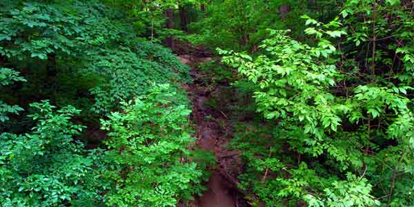 Romantic places in Illinois: Palisades State Park
