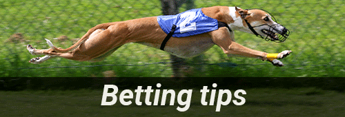 Start betting with our greyhound race betting tips