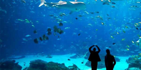 Singles in Atlanta dating at the Aquarium