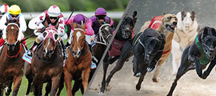 Greyhound and horse racing are major betting sports in Australia